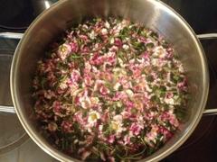 Gaensebluemchen-Kochen