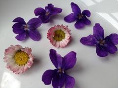 Veilchen und Gänseblümchen